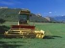 美国:科罗拉多州的种植者艰难前行