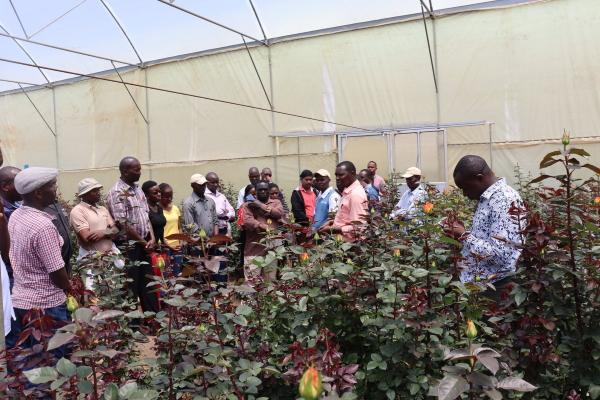 肯尼亚花卉农场主因疫情影响解雇大量工人