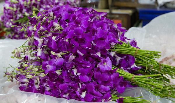 受COVID-19的影响,泰国的大量花卉被迫扔进垃圾箱