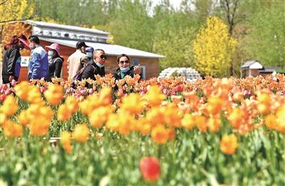 首届国际花园节亮相北京世园公园 世园标志性花卉景观全部恢复