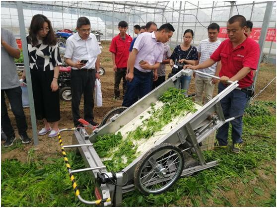 美国萨顿MINI蔬菜收获机.jpg