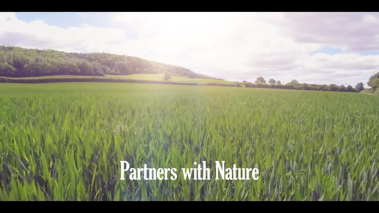 Strawberry pollination with Natupol bumblebees - S&A Produce.mp4