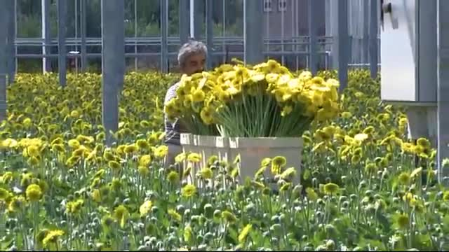 Berg Product B-Transporttrolley Gerbera.wmv.mp4