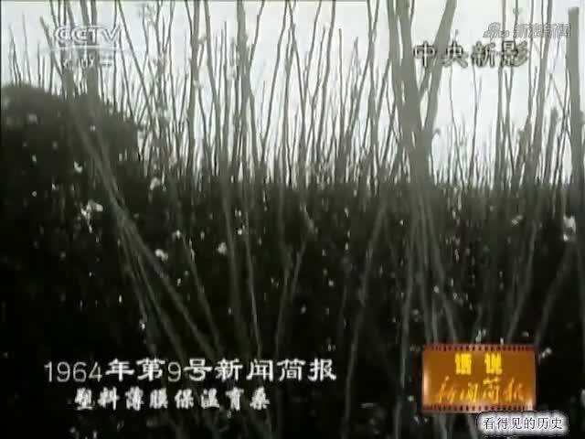 1963年广州就有了塑料大棚 感觉好高级.mp4